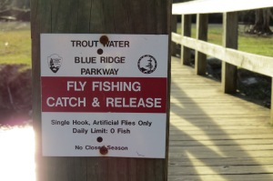 fly fishing catch & release